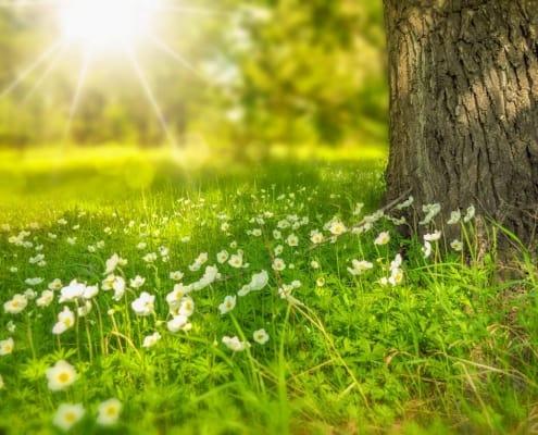 Blumenwiese mit einem Baum und Sonnenstrahlen