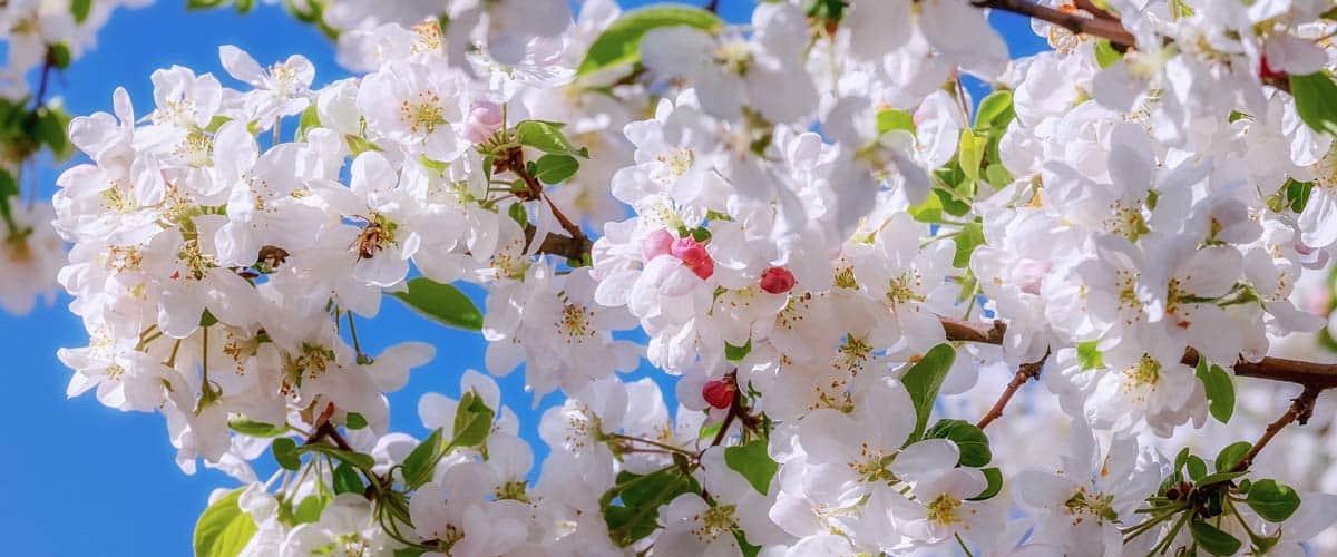 frische Blüten auf einem Ast